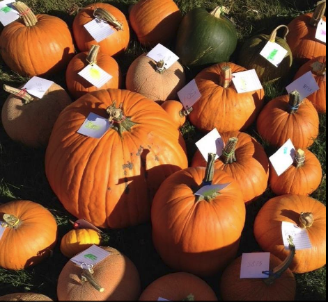 Pioneer Pumpkin Patch Sale @ Pioneer Elementary School
