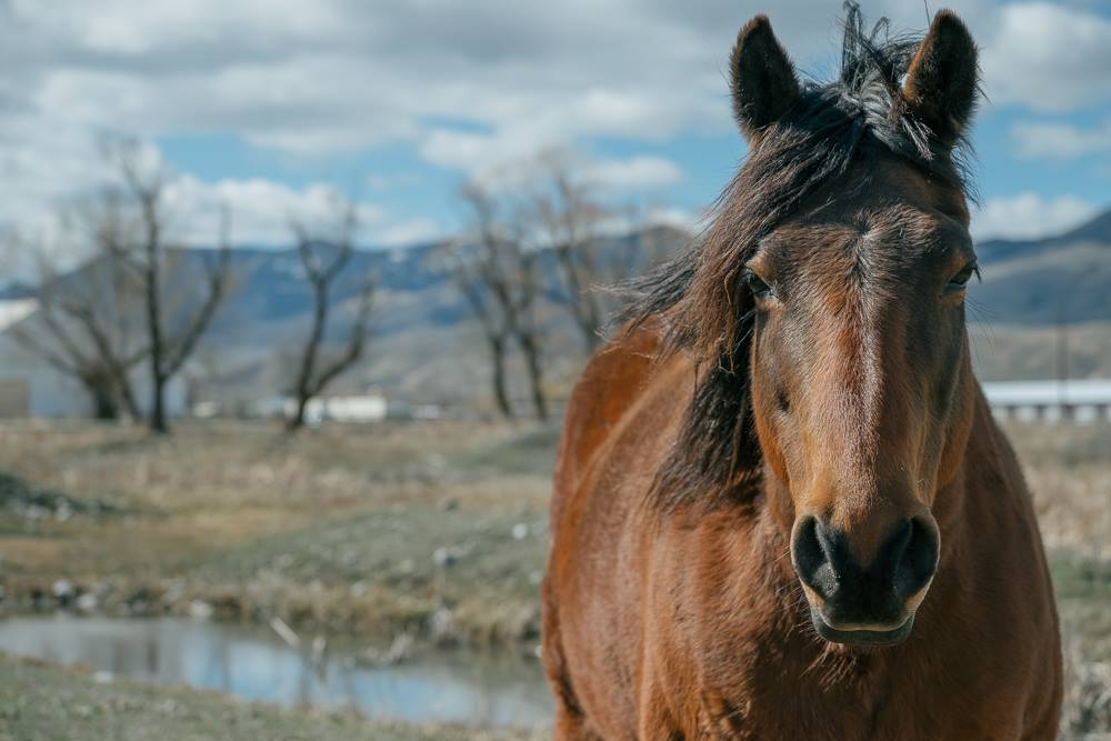 Whitewater Therapeutic Riding Cowboy Roundup @ Elks Hall